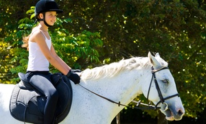 Susie Q Ranch: One or Four One-Hour Horseback Riding Lessons at Susie Q Ranch (Up to 45% Off)