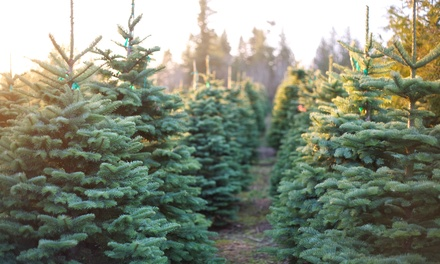 Christmas Tree with Delivery from Hilltop Christmas Tree Farms (Up to 49% Off). Four Options Available.