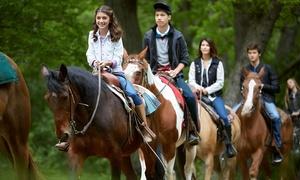 Spring Valley Farm: One-Hour Horseback Trail Ride for One, Two, or Four at Spring Valley Farm (Up to 60% Off)