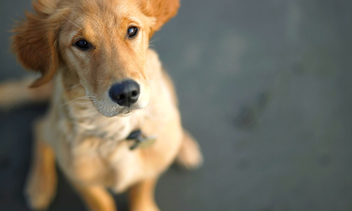 Green Valley Pets - El Dorado Hills: Three Nights of Dog Boarding or One Day of Doggy Day Care at Green Valley Pets (Up to 50% Off)