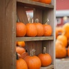 Up to 50% Off Attractions or Pumpkins