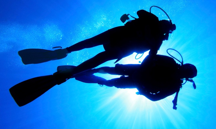 Gigglin Marlin Divers and Swim School - The Museum District: Discover Scuba, PADI Open-Water Certification, or Free-Diving Course at Gigglin' Marlin Divers (Up to 49% Off)