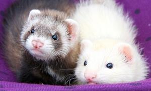 Clínica Nido: Castración o esterilización para un mamífero o revisión para un ave, reptil o mamífero desde 19,90 € en Clínica Nido