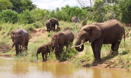South Africa Tour And Safari With Airfare From Gate 1
