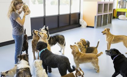Up to 53% Off Dog Boarding and Camp at The Animal Doctor
