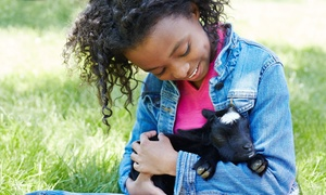 The Little Farm: Farm Visit for Two or Four at The Little Farm (Up to 40% Off)