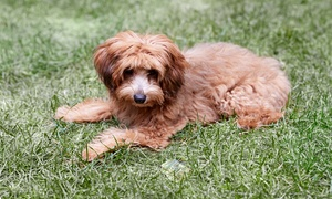Pet Avenue: Doggy Bath for a Small, Medium, or Large Dog at Pet Avenue (Up to 65% Off)