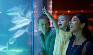 Up to 40% Off Food and Drink at Shark Reef Cafe at Shark Reef Cafe, plus 6.0% Cash Back from Ebates.