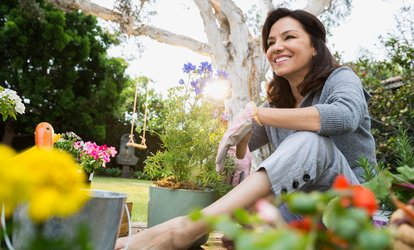 image for Garden Design and Maintenance Online Course from News Skills Academy (94% Off)