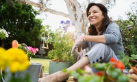 Garden Design and Maintenance Online Course from News Skills Academy (94% Off)