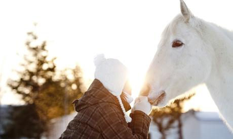 $30 Off $50 Worth of Horse Back Riding - Recreational 017232fe-bdb9-11e7-81f9-525422b4e6f5