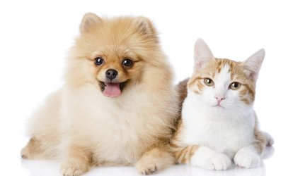 60% Off Pet Grooming and Cleanup Services