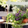 94% Off Online Gardening Course from London School of Trends