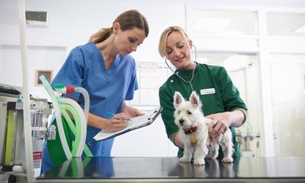 Curso online de ayudante técnico veterinario con certificación por 9,90 € en Grupo Menta Siglo XXI