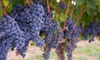 Niagara Fun Tours - Multiple Locations: Summer Wine Tour for One, Two, or Four from Niagara Fun Tours (Up to 64% Off)