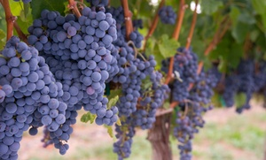 Niagara Fun Tours: Summer Wine Tour for One, Two, or Four from Niagara Fun Tours (Up to 64% Off)