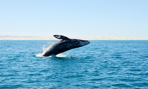 Two-hour Kayak Whale-watching Tour For One Or Two From Everyday California (up To 63% Off)