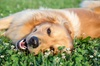 Up to 45% Off on Pet - Daycare at Sun Kissed Pet Palace