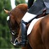Cours et stages d'équitation