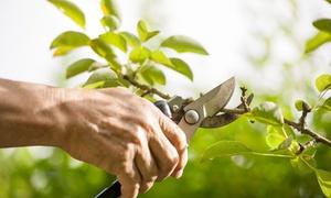 Zucca Giardini di Zucca Angelo: 3 o 6 ore di giardinaggio da Zucca Giardini di Zucca Angelo (sconto fino a 61%)