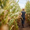 45% Off Corn Maze Admission