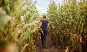 Montgomery Orchard: Corn Maze Admission for Four or Six at Montgomery Orchard (Up to 56% Off)