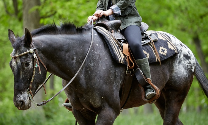 Silver Bit and Spur Farm - Readington: 60-Minute Horseback Trail Ride for Two or Four from Silver Bit & Spur Farm (Up to 46% Off)