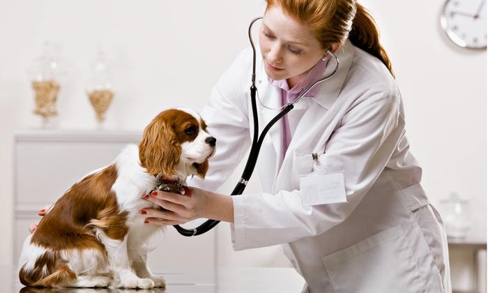 Revisión completa de perro o gato con vacuna de rabia desde 19,95 € en Centro Veterinario Laykat