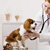 Visita veterinaria, vaccinazione, microchip