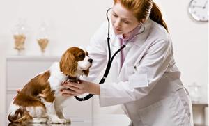 Ambulatorio Veterinario Leone: Visita medica veterinaria per cani o gatti con vaccinazione e microchip all'Ambulatorio Leone (sconto fino a 69%)