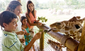 Zoo Atlanta: $200 for a Family Membership, Unlimited Rides, and a Panda Plush at Zoo Atlanta ($400 Value)