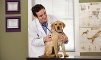 Dog, Cat or Rabbit Vaccination with Six-Month Health Check at White Cross Vets