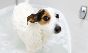 Pet Pantry and Dog Wash: Three or Six Self-Service Dog Washes at Pet Pantry and Dog Wash (Up to 58% Off)