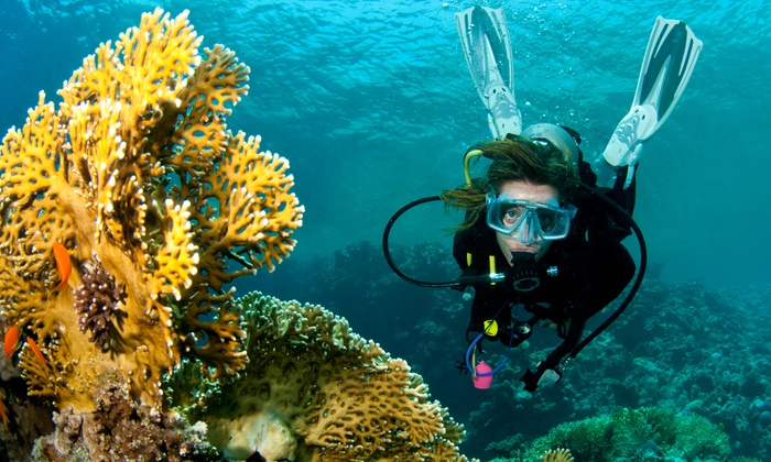 Diving Key West - Hurricane Hole Marina: Scuba-Diving Experience for One, Two, Four, or Six at Diving Key West (Up to 51% Off). No Certification Required.