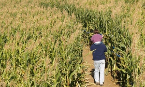 Harvest Fields Corn Maze: Corn Maze and Hay Ride for Two, Four, or Six at Harvest Fields Corn Maze (50% Off)