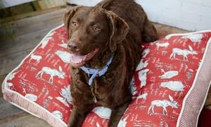Carolinas Critter Sitters Doggie Daycare & Pet Resort: Boarding or Doggie Daycare at Carolinas Critter Sitters Doggie Daycare & Pet Resort (Up to 51% Off)