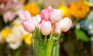 Phils Garden Center: $30 or $40 Worth of Plants and Flowers at Phils Garden Center (Up to 50% Off)