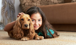ALWAYS GREEN Carpet Cleaning: Carpet Cleaning for Three or Five Rooms from ALWAYS GREEN Carpet Cleaning (Up to 77% Off)