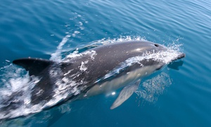 SaltWater Savages: Dolphin Sight-Seeing Tour for One or Two at SaltWater Savages (Up to 72% Off)