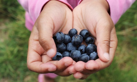 $13 for Admission for Two to Blueberry & Raspberry Festival at Connors Farm ($24.90 Value)
