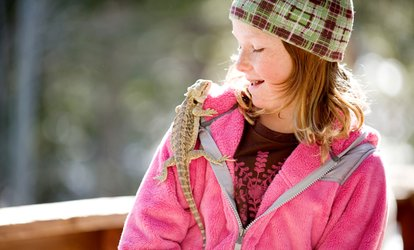 image for Reptile Handling Experience at Riverside Falconry
