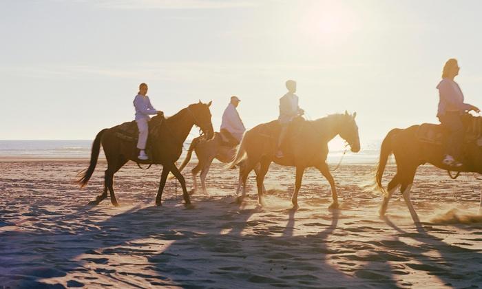 Tiara Arabians - Troy: $99 for Three Horseback-Riding Lessons at Tiara ($225 Value)