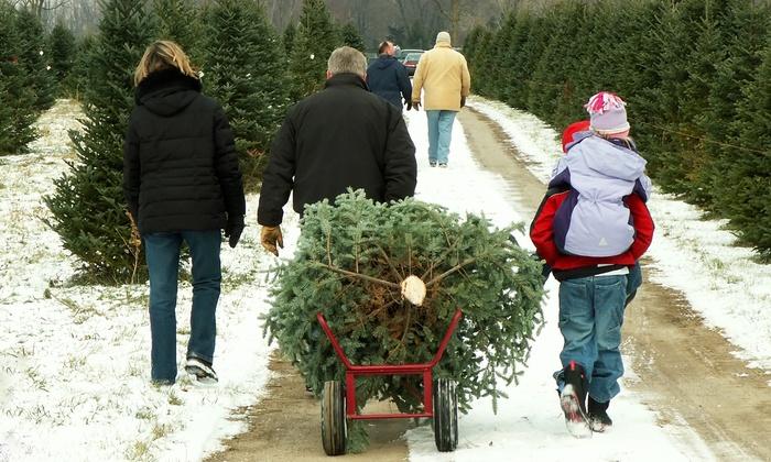 Summit Christmas Tree Farm - Los Gatos: $35 for a Douglas or White Fir Christmas Tree at Summit Christmas Tree Farm ($60 Value)
