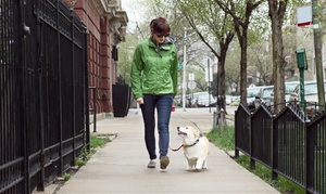 Providence Dog Walking Co: Five Dog Walks from Providence Dog Walking Co (45% Off)