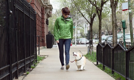 Pet-Sitting or Dog-WalkingServices from Snagglefoot Saint Louis (Up to 62% Off). Six Options Available.