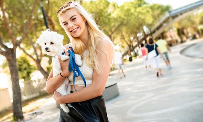Online Animal-Psychology Course: $5 for an Accredited Online Animal-Psychology Course from Holly and Hugo ($175 Value)