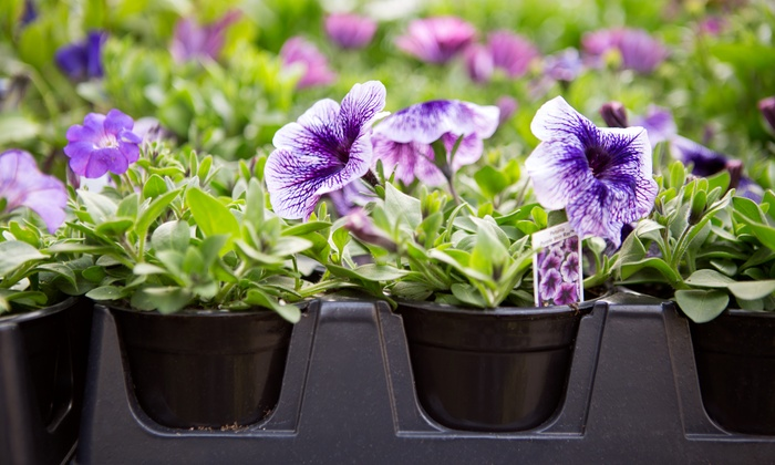 Lotus Gardens Outdoor Living Center - Multiple Locations: $15 for $30 Worth of Plants and Nursery Supplies at Lotus Gardens Outdoor Living Center