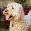 65% Off Pet Vaccination at Animal Wellness Clinic of Tamarac