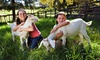Green Meadows Petting Farm - Ripple Brook West: Animal Petting Farm Visit for Two or Four at Green Meadows Petting Farm (Up to 42% Off)