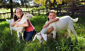 Green Meadows Petting Farm: Animal Petting Farm Visit for Two or Four at Green Meadows Petting Farm (Up to 42% Off)